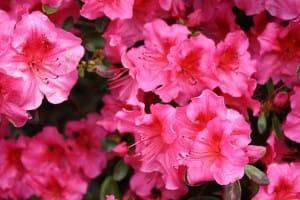 Blüten im Garten als Feind der Whilrpools